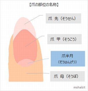 爪の部分名称