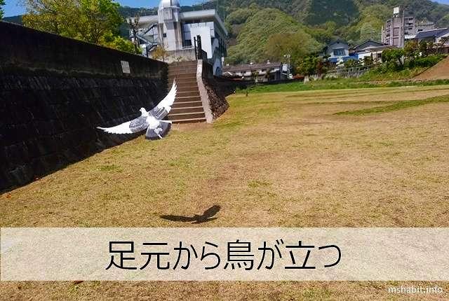 足元から鳥が立つ