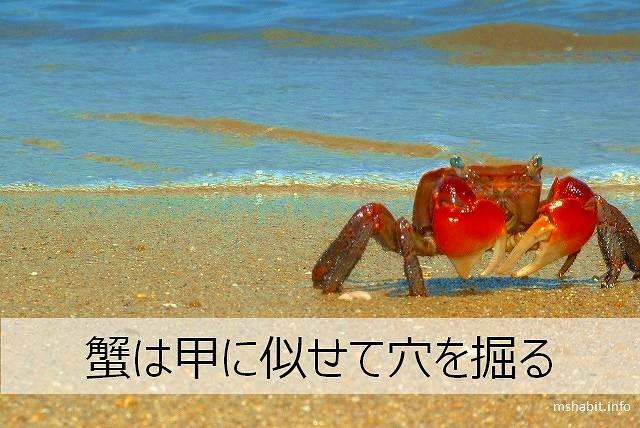 蟹は甲に似せて穴を掘る