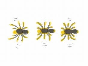 蜘蛛の子を散らす