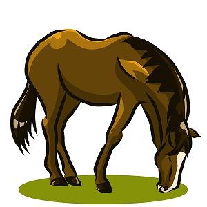 馬を水辺に連れて行くことはできるが水を飲ませることはできない