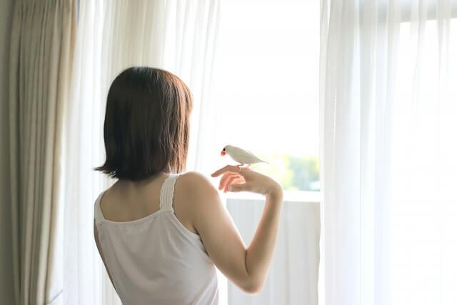 朝日差し込むカーテン