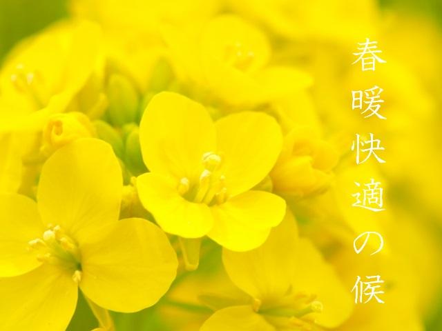 春暖快適の候