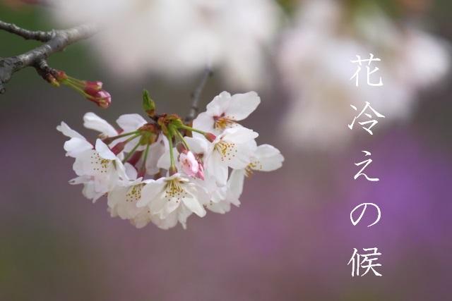 花冷えの候