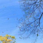 木枯らしの候